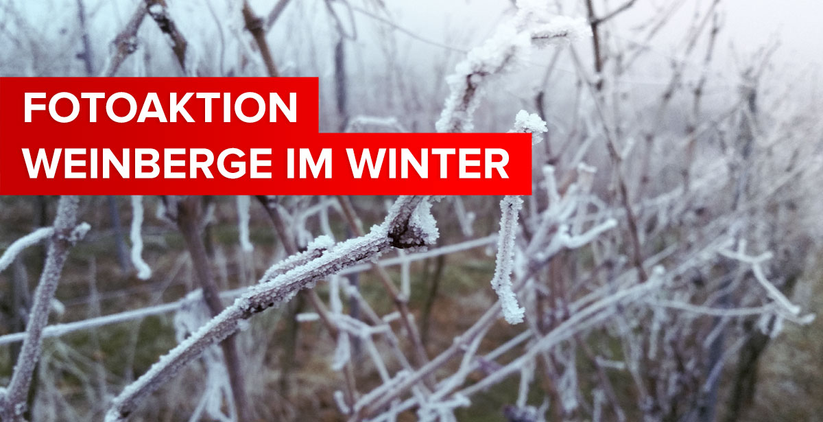 """Featured image for """"FOTOAKTION: Weinberge im Winter"""""""