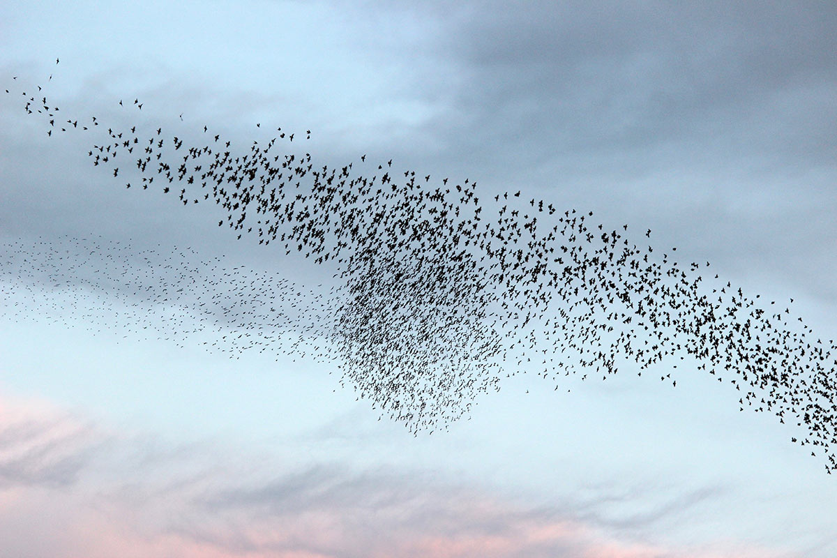 """Featured image for """"Vogelschreck – Trauben weg"""""""