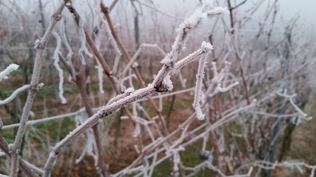 """Featured image for """"Der Weinberg im Winter"""""""