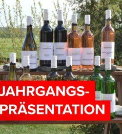 12 Flaschen Sommerweine